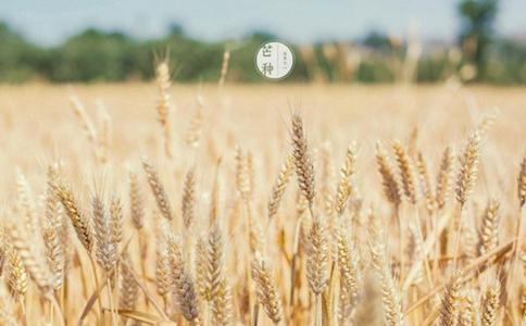 2018芒种节气怎么养生?芒种节气需要注意什么养生食谱介绍