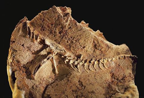 古代人是怎么看待恐龙化石的?