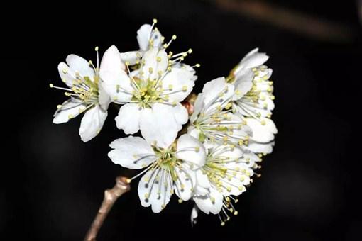 古人作诗为何喜欢伤春悲秋?这是一种怎样的感情表达