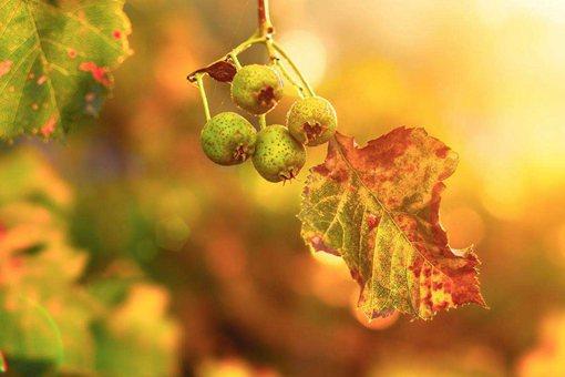 秋分之后还热吗?有什么饮食讲究应该吃什么?