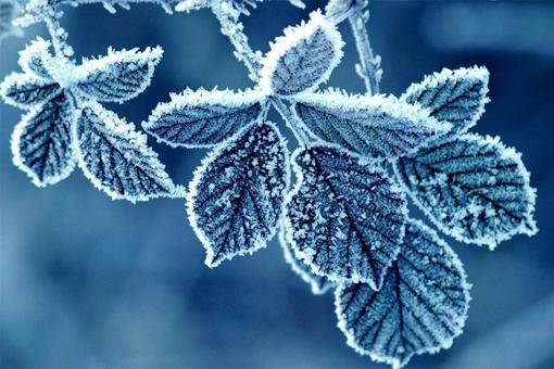 霜降的典故,霜降有哪些传统习俗?