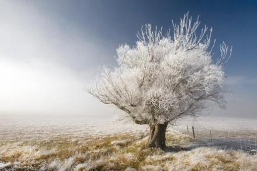 小雪的典故,小雪有哪些传统习俗?
