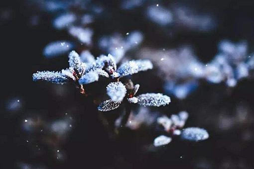 霜降是几月几日,霜降是几月几日2019