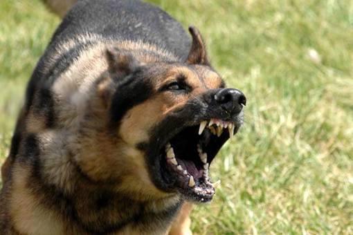 古代人被狗咬了怎么办?古代人是如何预防狂犬病的?