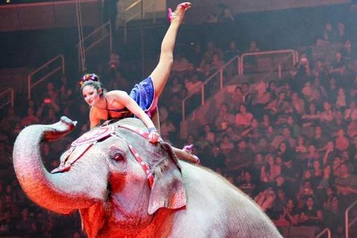 大象玛丽被当众吊死是怎么回事?