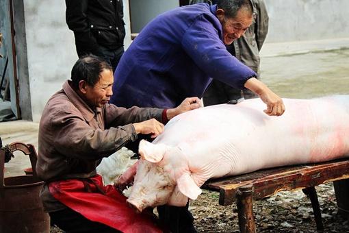 中国人过年为什么一定要杀猪呢?