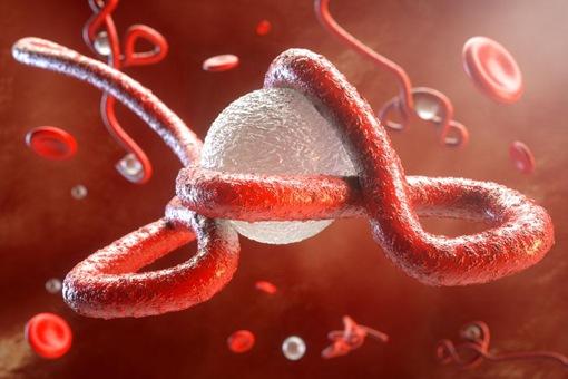 埃博拉病毒怎么消失了 埃博拉病毒有疫苗了吗