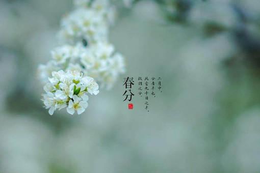 关于描写春分时节的诗有哪些?赏析35首春分诗词