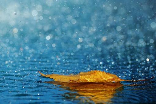 一叶知秋下一句怎么接 一叶知秋表达了什么感情寓意
