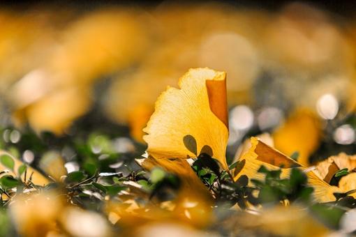 如何用古诗词形容秋景 形容秋景的古诗词大全
