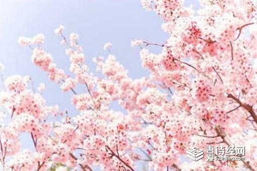 关于春的成语有哪些 关于