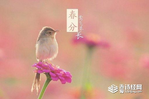 春分节气的含义是什么 春分有哪些风俗活动
