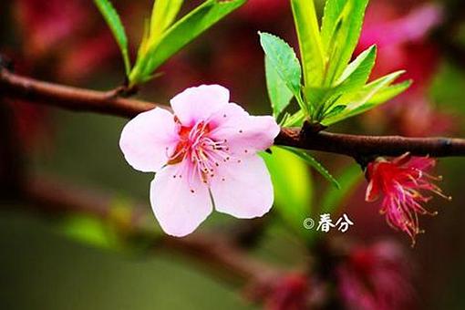 关于春分节气知识点详细介绍