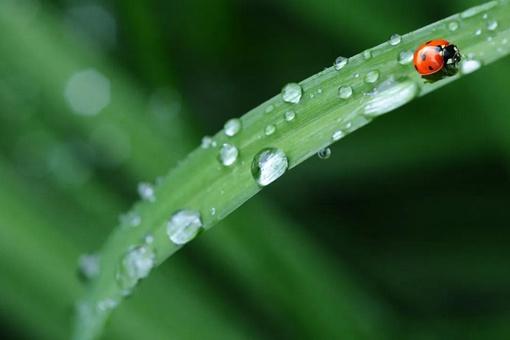 描写谷雨的古诗有哪些 关于谷雨节气古诗大全