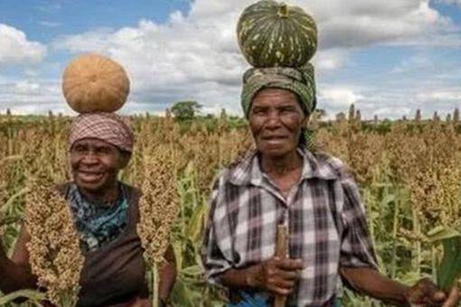 津巴布韦没收白人土地是为什么 为何现在又想让白人回归呢