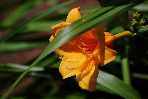 我国古人常用哪种植物象征母爱