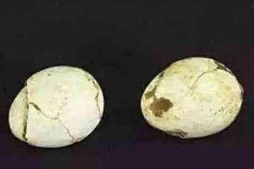 考古者为什么害怕发现鸡蛋