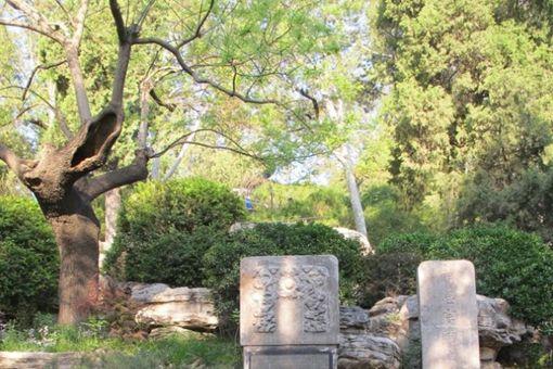 吊死崇祯皇帝的槐树为何被铁链拴了200年直至枯死