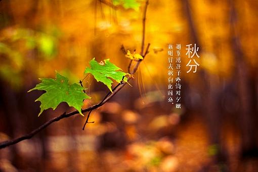 秋天古诗最好的10首(含赏析)