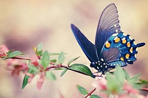 蝶恋花是曲牌名吗?