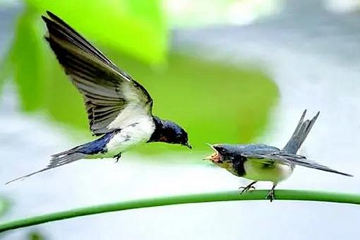 在诗经燕燕中的差池是什么意思?